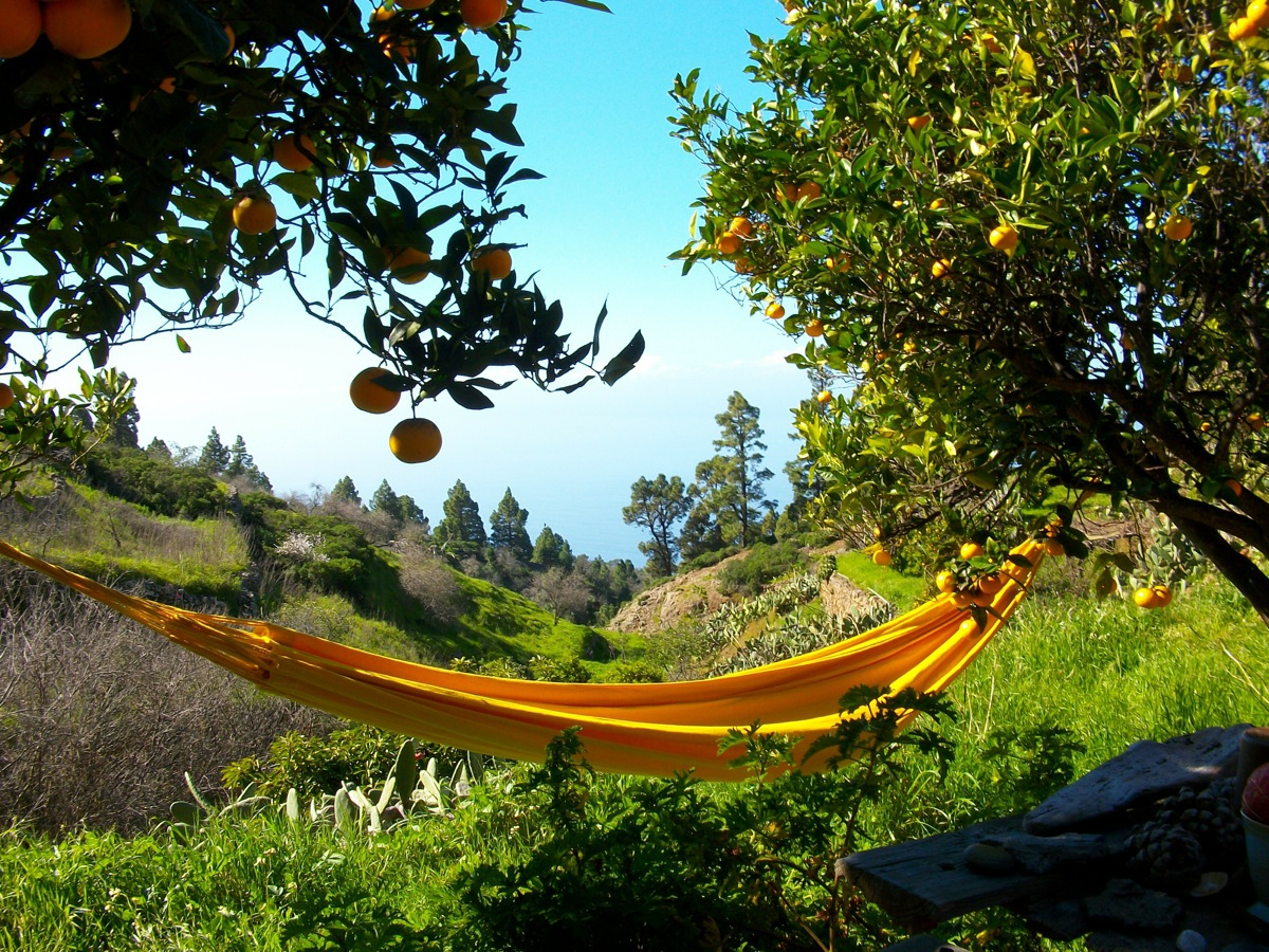 Die Hängematte mit Meerblick zwischen Orangen