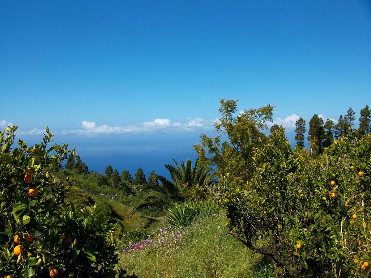 Meerblick von der Terrasse über Orangen, Palmen und Pinien