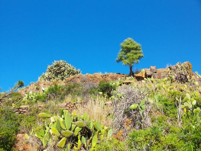 Puristische Gegend am Barranco Garome