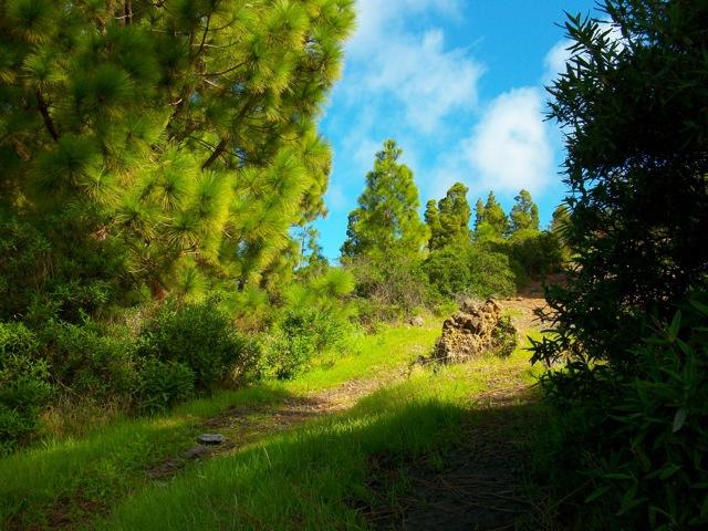 Weg unterhalb der Finca - Ziegenfad